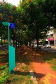 東豐路台灣灤樹:IMG_6873.JPG