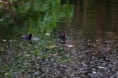 關渡自然公園:IMG_8688