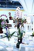 2011台北國際蘭展:IMG_2839.JPG