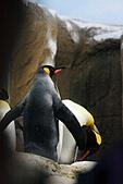 木柵動物園外拍:IMG_3488.JPG