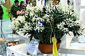 2011台北國際蘭展:IMG_2843.JPG