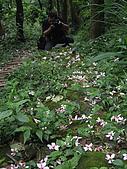 大溪大艽芎古道賞油桐花---驚見赤尾青竹絲:P1010053