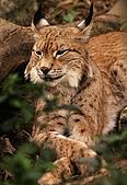 動物園內貓纜站:IMG_9311.jpg