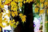 福壽山松廬楓紅:IMG_6543.JPG