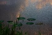 關渡自然公園:IMG_8679