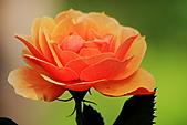 士林官邸玫瑰:IMG_2151.JPG