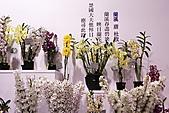 2011台北國際蘭展:IMG_2853.JPG