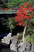 武陵農場楓紅&落羽松:IMG_7190.JPG