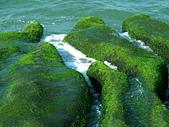 石門老梅。綠石槽:DSC00292.JPG