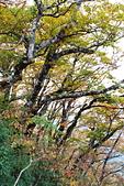 臺灣山毛櫸步道(二):IMG_4935.JPG