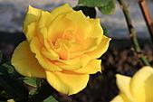 士林官邸玫瑰:IMG_2180.JPG