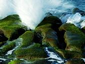 石門老梅。綠石槽:DSC00362.JPG