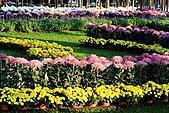 菊宴。台北城:IMG_8606.JPG