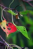 關渡自然公園:IMG_8674