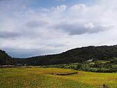 桃園風尾坑梯田:DSC09149.JPG