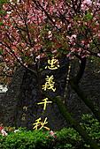 戀戀吉野櫻:IMG_2116.JPG