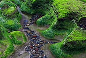 老梅綠石槽:IMG_1513.JPG