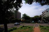 東豐路台灣灤樹:IMG_6867.JPG