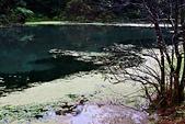 福山植物園的溼意:IMG_9753.JPG