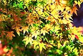 福壽山松廬楓紅:IMG_6562.JPG