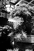 菊宴。台北城:IMG_8754.JPG