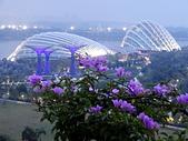 新加坡隨手拍拍:DSC01012.JPG