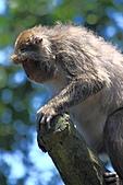 木柵動物園外拍:IMG_3125.JPG