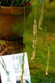伯朗咖啡金車蘭花園:IMG_7941.JPG