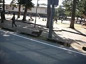 2007日本行(五):路邊就有鹿了ㄟ