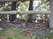 2007日本行(五):鹿