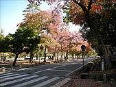 2007日本行(五):雖然不是楓紅,但是還是漂亮啦~