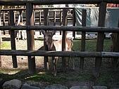 2007日本行(五):遙望遠方的小鹿~