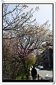 2009.04.03 東京賞櫻day7:DSC_0206.jpg