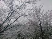 東眼山賞雪  20160124: