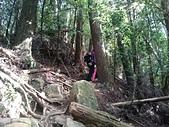 長腳登山隊的快樂行腳之杉林溪留龍頭登淵靖茶園、連走忘憂森林 20170204: