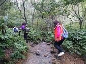 長腳登山隊的快樂行腳之暖東峽谷行腳 20160313:
