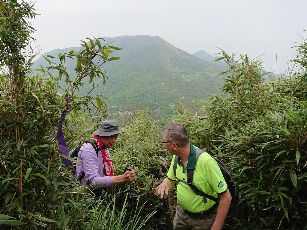 長腳登山隊的快樂行腳之小觀音山西峰.西西峰.山之家連走20180422: