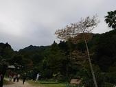 復興區桃源仙谷  20171202: