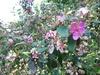 以下今日行程中的花花草草