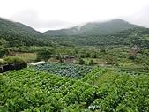 長腳登山隊的快樂行腳之竹子湖產業道路.中正山步道連走 20200524: