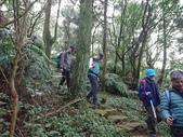 長腳登山隊的快樂行腳之七星山主、東峰步道 20200105:
