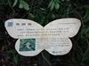 以下為步道沿途的生態解說及植物生態