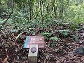 浙江淳安.千島湖之「森林氧吧」20180520: