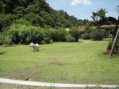 070805大雪山社區+安妮公主花園:IMGP9985