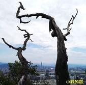 109.08.09金面山親山步道:剪刀石山10.jpg
