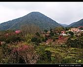 100年陡步山林:陽明山賞櫻花09.jpg