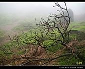 100年陡步山林:七星池01.jpg