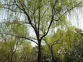 拙政園:DSC08613.JPG