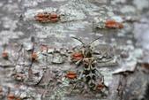 蟲蟲雜拍:DSC_9734.jpg