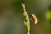 蟲蟲雜拍:IBIN2307.jpg